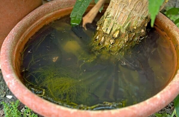 zanzare-vaso-acqua-stagnante