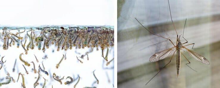 zanzare-in-casa